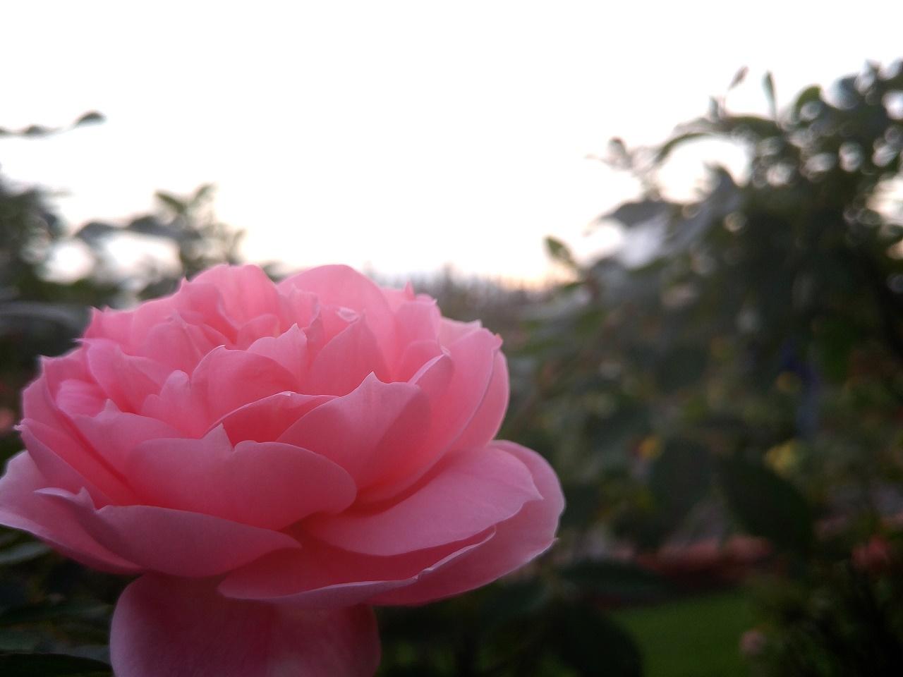 フラワーレッスン~秋の実ものとお花