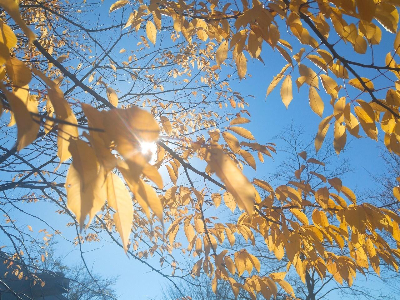 秋に育まれる実と花のやさしい色につつまれて