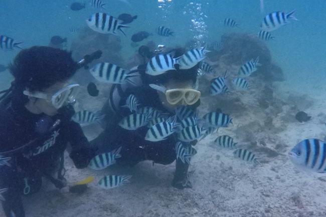 修学旅行で体験ダイビング