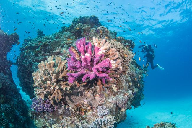 伊平屋島 カエルアンコウの巣