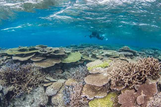伊平屋島のサンゴ礁①