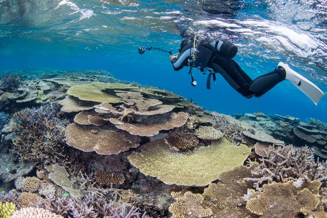 伊平屋島のサンゴ礁②