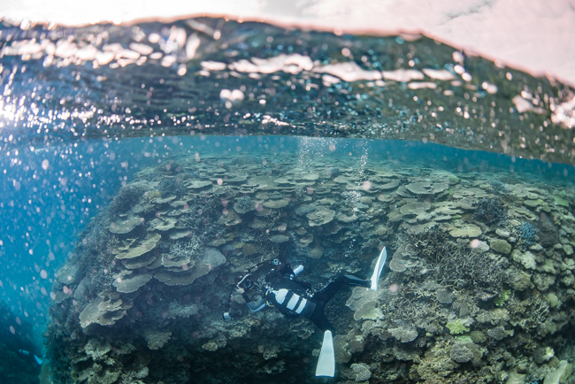 伊平屋島のサンゴ礁④
