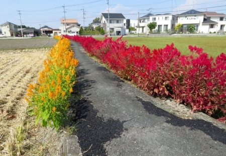 赤黄色の花 2018-10-18 011