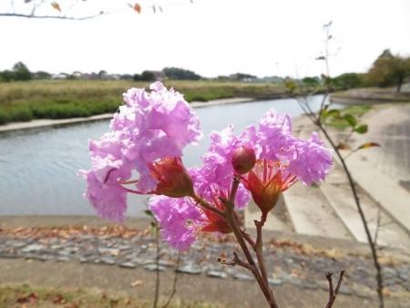蝶花運動公園 2018-10-17 016