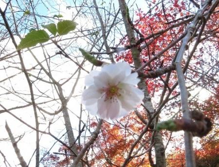麻生池 2018-11-14 114