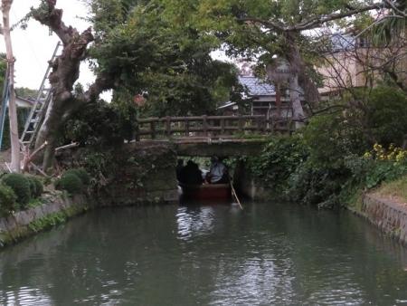 ドンコ舟菊 2018-11-16 025
