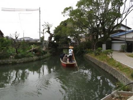 ドンコ舟菊 2018-11-16 022