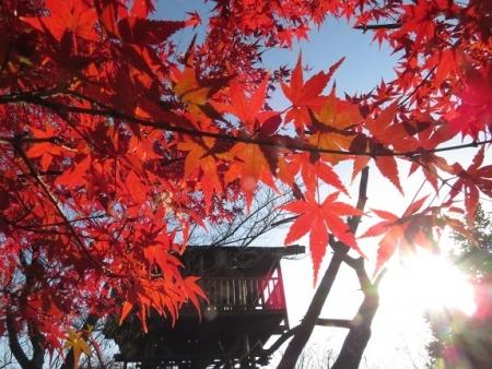 長田の銀杏 2018-11-29 114