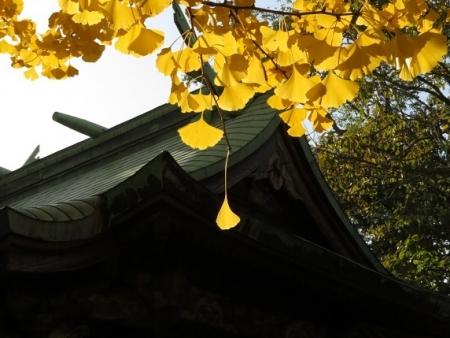 長田の銀杏 2018-11-29 035