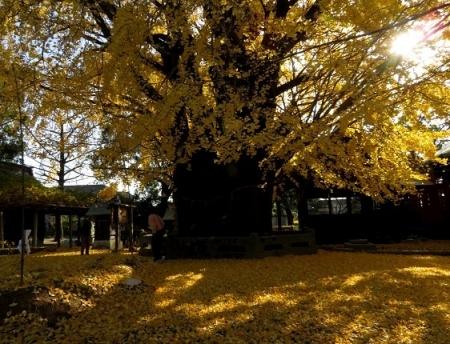 長田の銀杏 2018-11-29 043