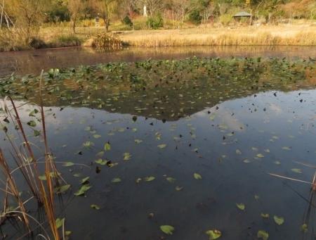 銀杏佐賀県立公園 2018-11-30 123