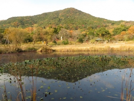 銀杏佐賀県立公園 2018-11-30 125