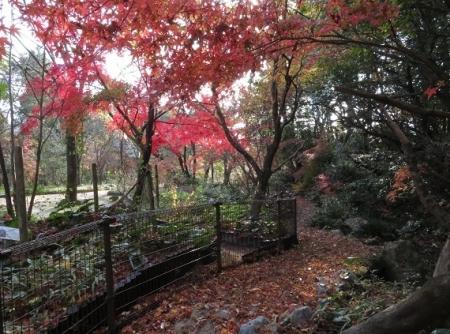 銀杏佐賀県立公園 2018-11-30 134