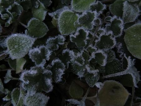 カラ迫岳登り納め 2018-12-25 004