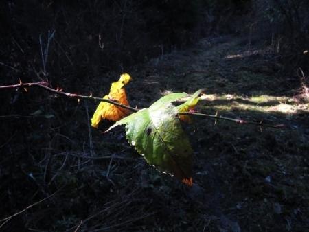 カラ迫岳登り納め 2018-12-25 020
