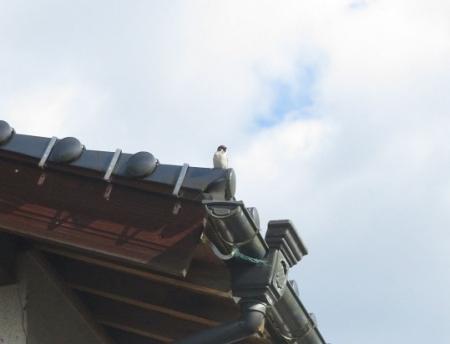 清水寺へ 2019-01-02 012