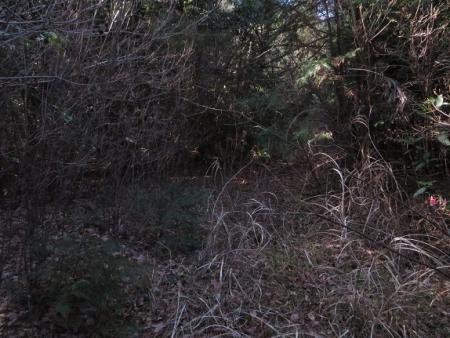 源太窯より登る 2019-01-23 030