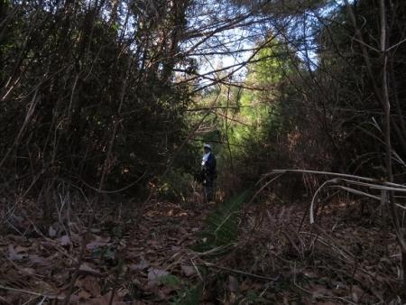 源太窯より登る 2019-01-23 031