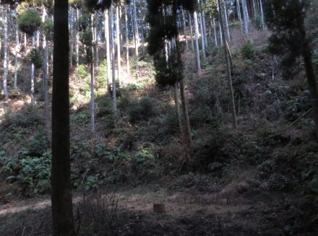 源太窯より登る 2019-01-23 059