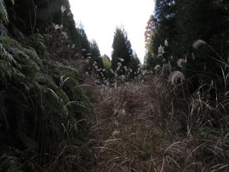 源太窯より登る 2019-01-23 054