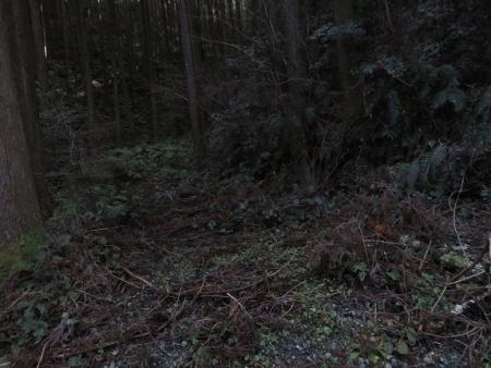 源太窯より登る 2019-01-23 077