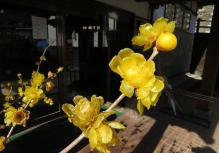 霊巌寺・峠 2019-01-18 053