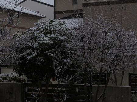初雪 2019-01-26 007