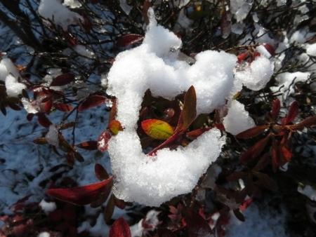 初雪 2019-01-27 011