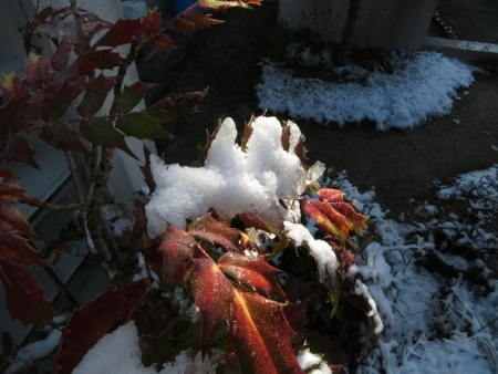 初雪 2019-01-27 012