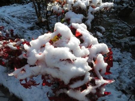 初雪 2019-01-27 010