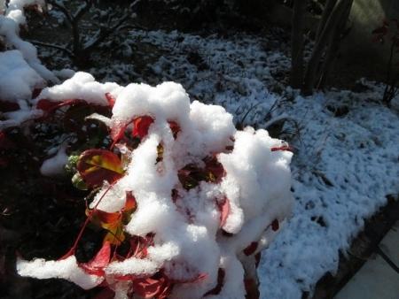初雪 2019-01-27 009