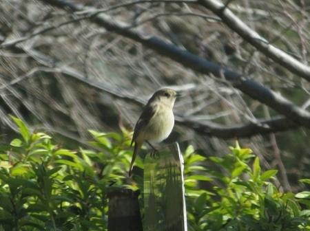 紋付鳥 2019-01-29 011