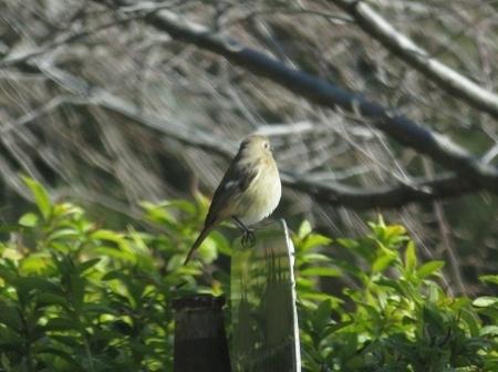 紋付鳥 2019-01-29 002