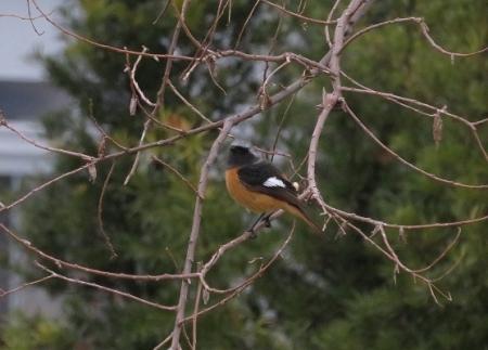 紋付鳥 2019-02-15 020
