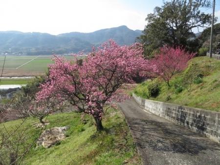 多久公園・牛尾梅 2019-02-17 036