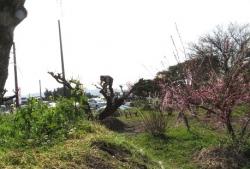メジロ梅花園 2019-02-26 061
