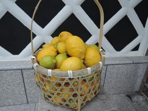 リスボンレモン5