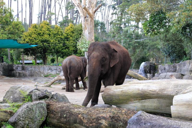 オークランド動物園 観光 おすすめ