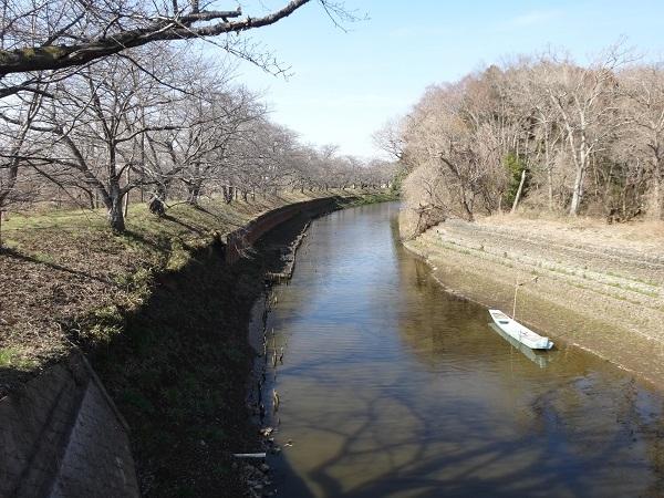190302福岡堰 (6)