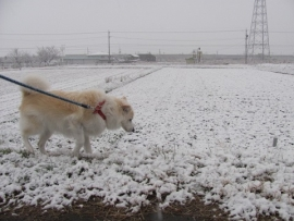 初積雪 IMG_7612