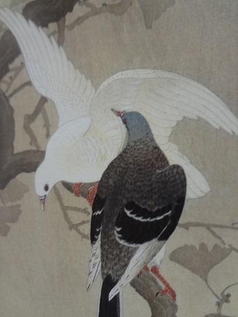 雨中の公孫樹に鳩