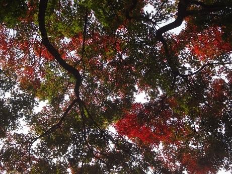 五島美術館紅葉