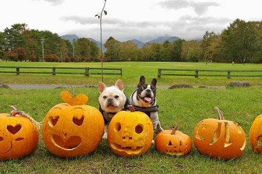 10-15直かぼちゃ