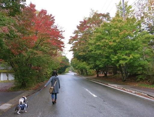 10-15紅葉散歩