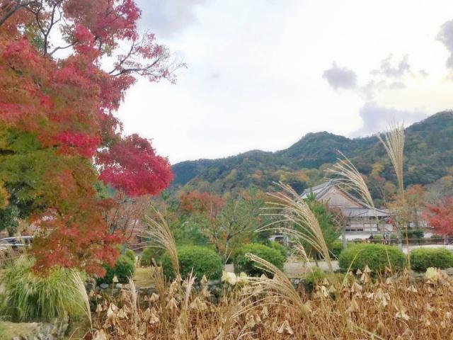 京都 嵐山 (6)