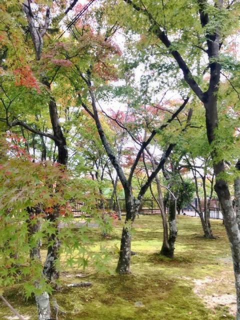 京都 嵐山 (7)
