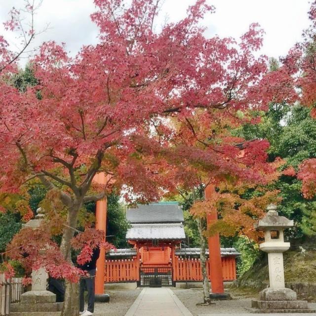 京都 嵐山 (8)