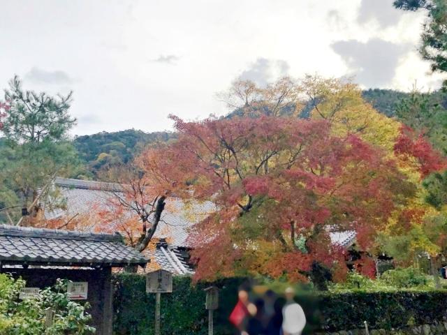 京都 嵐山 (9)