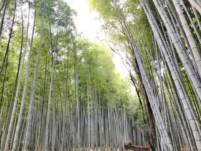 京都 嵐山 (17)